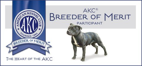 Camelot Staffordshire Bull Terriers, Puppies, Breeders, Fair